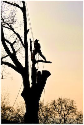 Tip Top Tree Surgeon